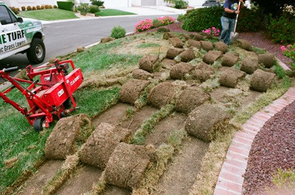 Sod Rolls laying on Lawn ready to be removed