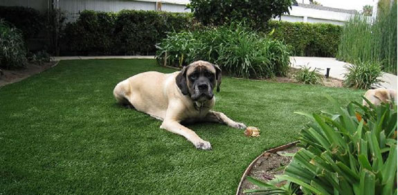 Dog enjoying a artificial lawn