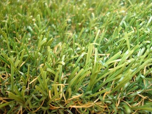 fescue artificial turf